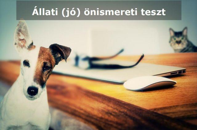 Állati (jó) önismereti teszt