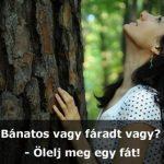 Ölelj meg egy fát