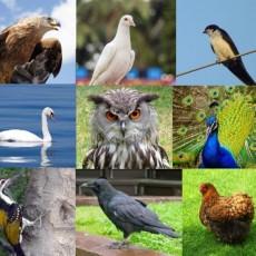 Önismereti madár-teszt – avagy a benned rejlő szellemi plusz