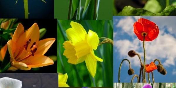 Önismereti teszt: Milyen virág lennél?